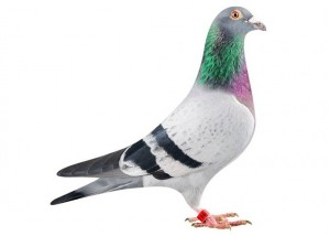 control-de-aves-control3d