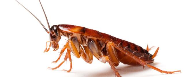 control de plagas cucarachas