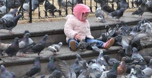 control de plagas palomas